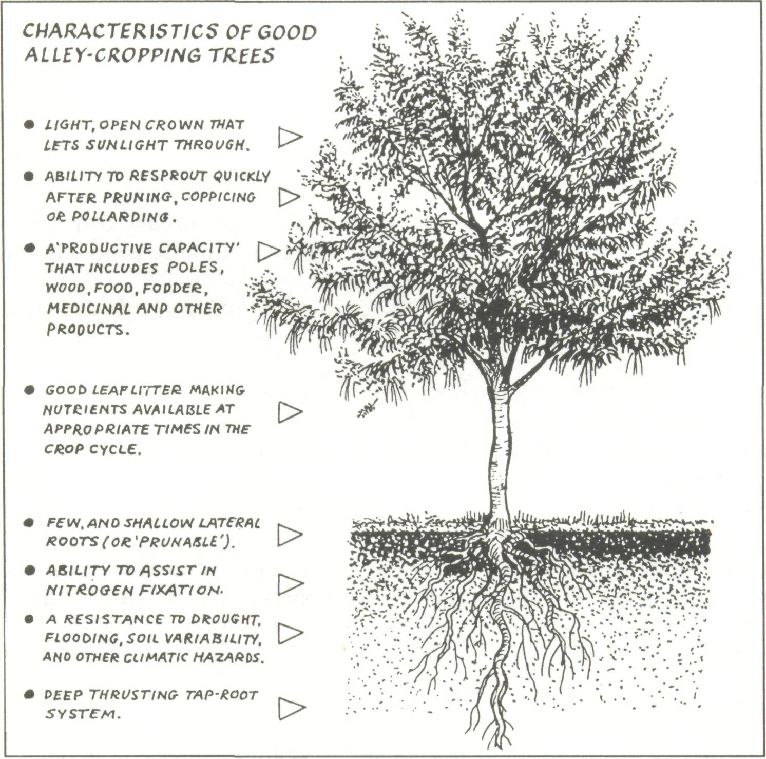 criteria for a good agroforestry tree figure 7 1 a tree most of these characteristics is likely to be highly valued by farmers