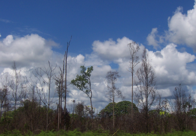 Hotspots of carbon confusion in Indonesia threaten to warm the world more quickly