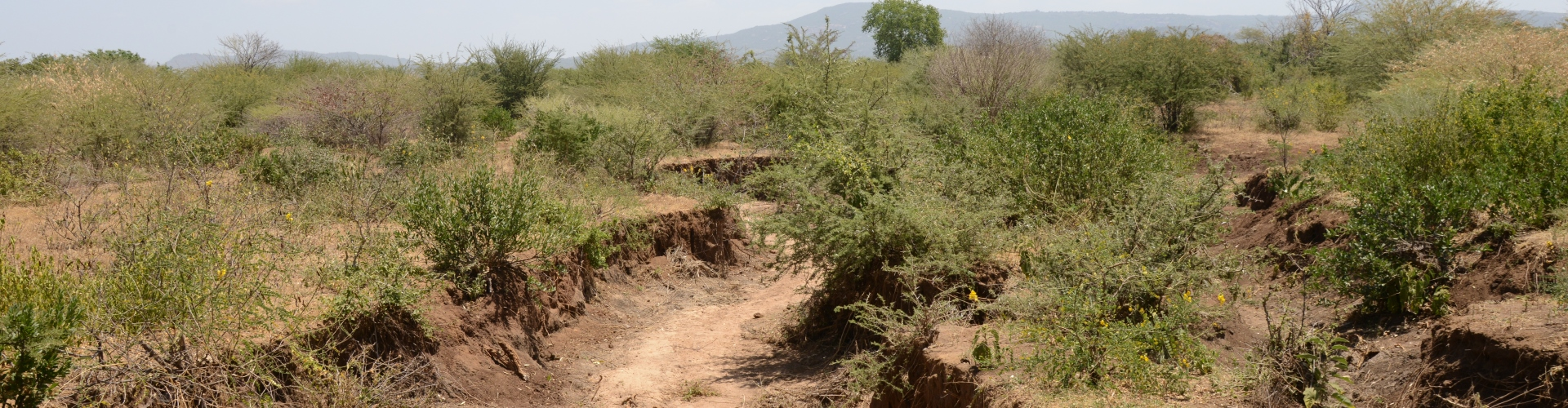 Degraded land in Mwingi, Kenya