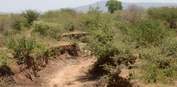 Degraded land in Mwingi, Kenya